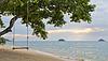 해변에서 맹그로브 나무에 로프 스윙 | Stock Foto