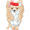 Mode Hunderasse Chihuahua lächelnd