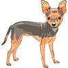 Skizze Hund Rasse Chihuahua lächelnd