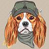 Nette hipster Hund Cavalier King Charles Spaniel zu züchten