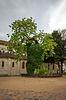Robinie - älteste Baum in Paris, Platz Rene | Stock Foto