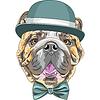 有趣的卡通时髦的狗英国斗牛犬的品种 | 光栅插图
