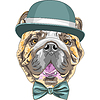 Lustigen Comic-Hipster Hund Rasse Englische Bulldogge | Stock Illustration