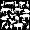 Schwarze Silhouetten Set Zootiere Sammlung