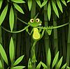Frosch im Dschungel