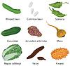 Satz von verschiedenen Gemüse