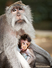 Monkey feeds her cub. Animals - mother and child | Stock Foto