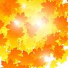 Векторный клипарт: Фон на осеннюю тему, кленовые листья падают.