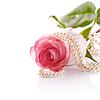 粉红色的玫瑰和珍珠珠 | 免版税照片