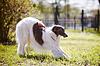拉布拉多猎犬 | 免版税照片