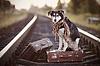 狗在轨道上的行李箱 | 免版税照片