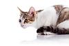 재미있는 새끼 고양이가 앉아 | Stock Foto