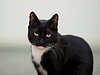 Black and white cat | Stock Foto