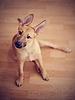 好玩不纯种的小狗 | 免版税照片