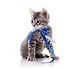 테이프 회색 고양이 | Stock Foto