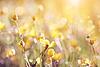 노란색 미나리와 배경 | Stock Foto