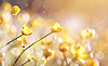 미나리의 노란색 꽃과 배경 | Stock Foto