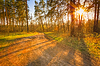 Sunset In Spring Forest | Stock Foto