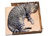 Gato durmiendo en caja de cartón | Foto de stock