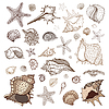 Sea shells collection | Stock Vector Graphics