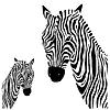 Векторный клипарт: Zebra.