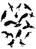 Czarne ptaki   Stock Vector Graphics