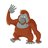 Orangutan   Stock Vector Graphics