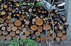 Stos posiekane uschniętych drzew owocowych.   Stock Foto