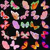 Set mit bunten isoliert realistisch butterflies.Vektor i