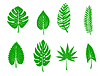 Grüne tropischen Blättern | Stock Vektrografik