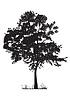 Векторный клипарт: силуэт дерева