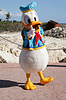ID 4299205 | ORLANDO, FL- FEB 5: Donald duck dressed as captain | 높은 해상도 사진 | CLIPARTO