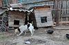 Hund an der Kette Essen in der Nähe Zwinger | Stock Foto