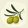 Estilizada rama de olivo fresca madura | Ilustración vectorial
