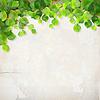 트리 분기 석고 벽 배경 나뭇잎 | Stock Vector Graphics