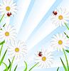 Hintergrund mit Blumen der Kamille und Marienkäfer