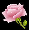 Векторный клипарт: Розовая роза на черном фоне