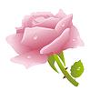 Векторный клипарт: Розовая роза