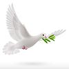 Taube fliegen