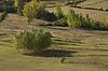 ID 4182568 | Drzew na prerii | Foto stockowe wysokiej rozdzielczości | KLIPARTO