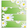 3D 꽃 흰색 카모마일과 배너의 집합 | Stock Vector Graphics