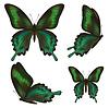Set schöne realistische grüne Schmetterlinge