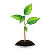 Векторный клипарт: Новый зеленый росток и почвы