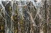 ID 4151988 | Ist ein altes Fischernetz | Foto mit hoher Auflösung | CLIPARTO