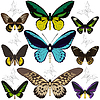 Set von Schmetterlingen