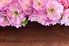 아몬드 꽃 | Stock Foto