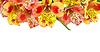 꽃다발 | Stock Foto