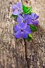 대 수리 꽃 | Stock Foto