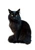 Schwarze Katze | Stock Foto
