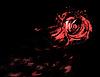 Streszczenie róża | Stock Illustration